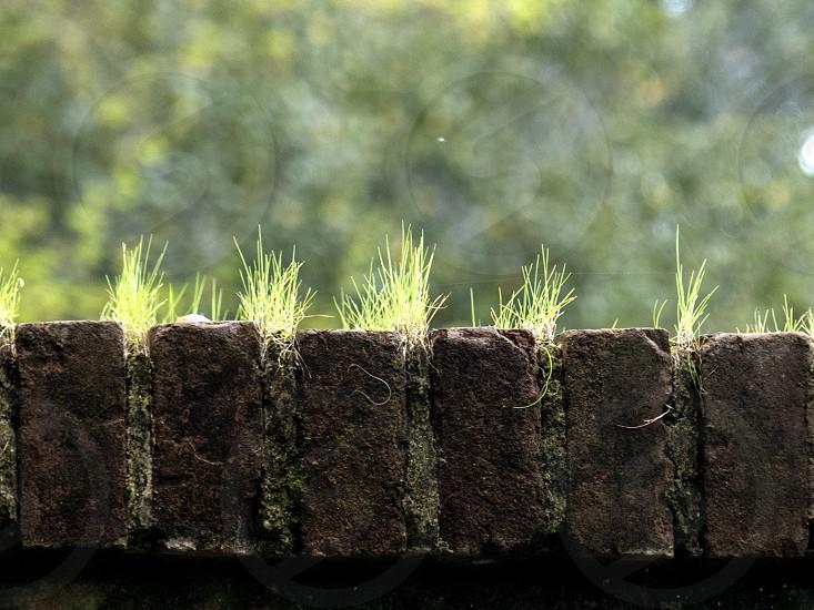 bricksgrass photo