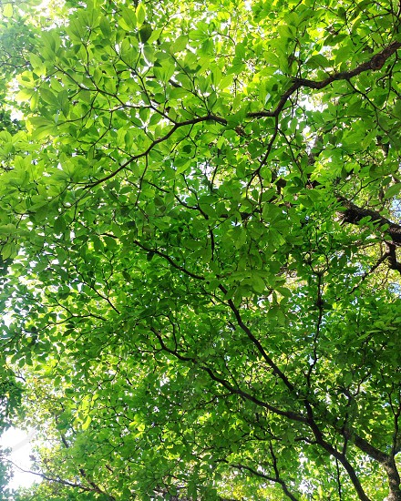 Treetops in a Spring day photo