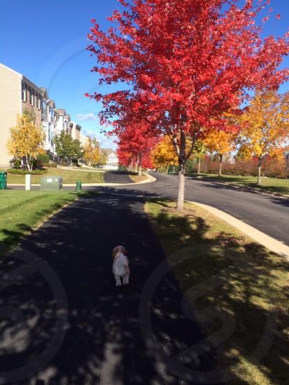 Fall walks photo