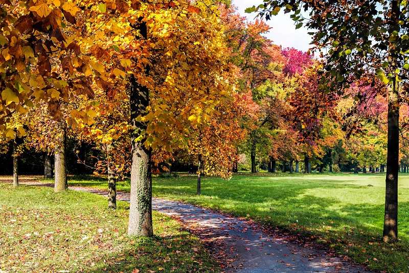 Autumn Tints in Parco di Monza Italy photo