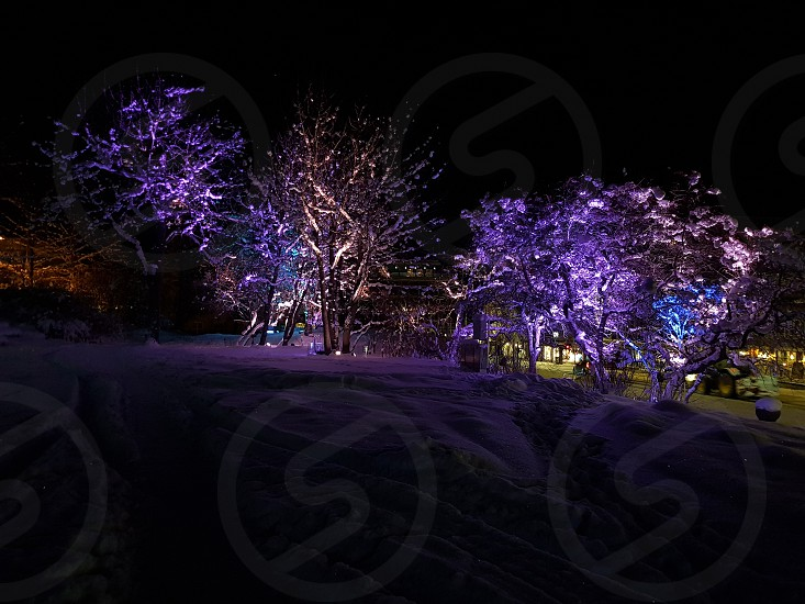 Generalhagen in Harstad Norway. Winter decoration photo