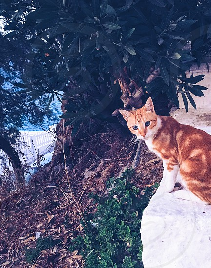 car pet  pet portrait  mammal greece whiskers  outdoors sitting red speckled tree nature  photo