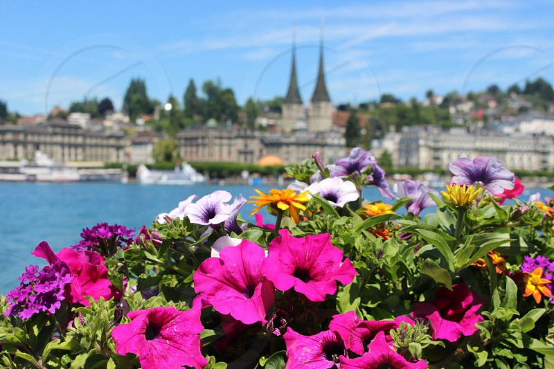 Flowers in Switzerland (Lucerne Switzerland) photo