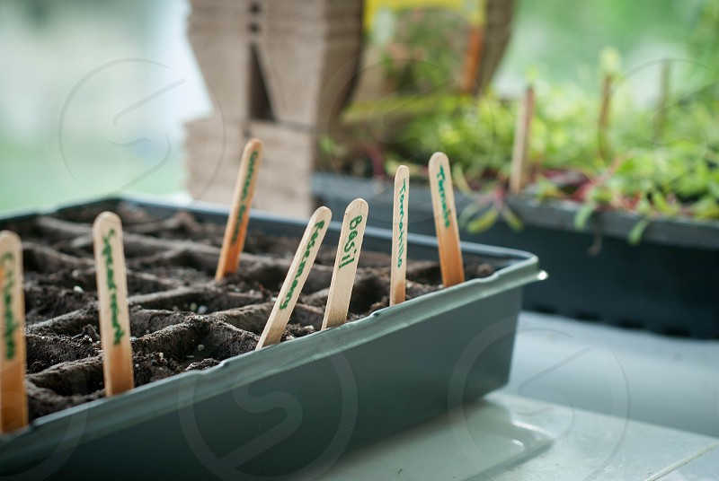 Just planted seedlings in the window of the laundry room. photo