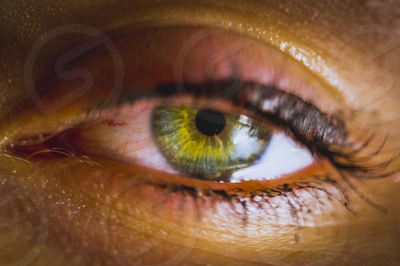 A beautiful green eye photographed at close. photo