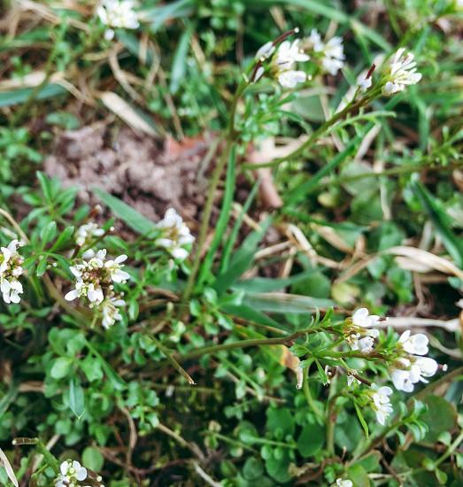 Springflowerswhitegreenplant photo