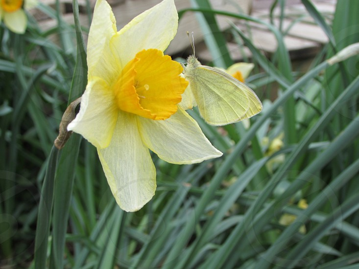 yellow flower photography photo