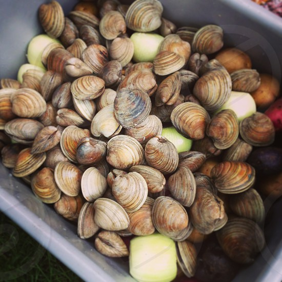 Clam bake. photo
