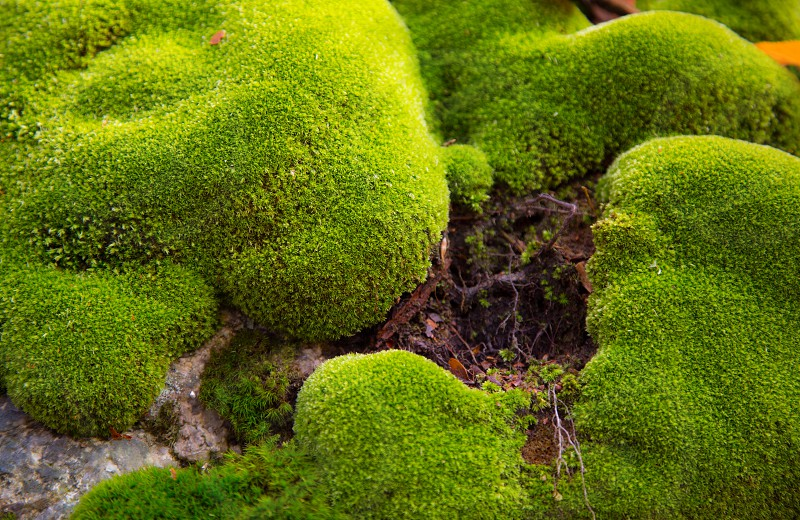 green yellow light moss texture fine cushion photo