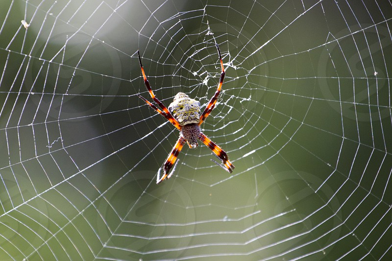 spider net at Maui  photo