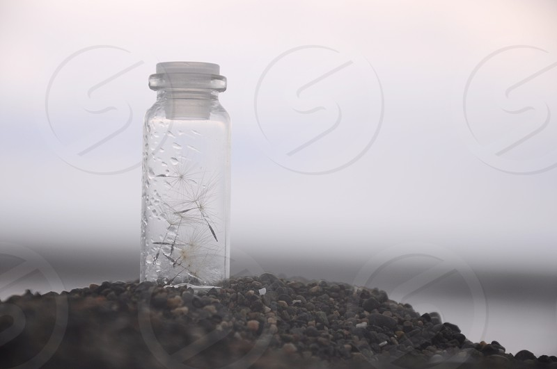 clear glass bottle with dandelions photo