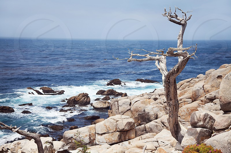 17 Mile Drive; Carmel by the Sea; California; Pacific Ocean; nature; landscape; travel photo