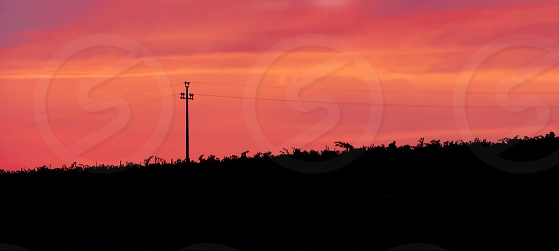 Silhouette of an energy pylon in a pink sunset. nobody. outdoor shot photo