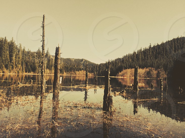 Wolf marsh Oregon photo