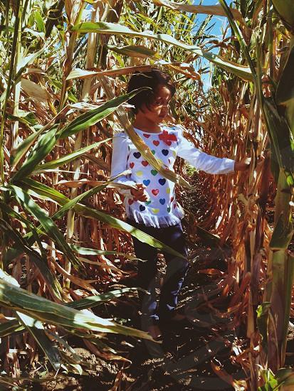 girl on corn fields photo