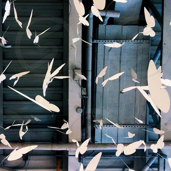 Ceiling butterflies  photo