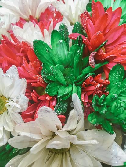 Christmas flowers  photo