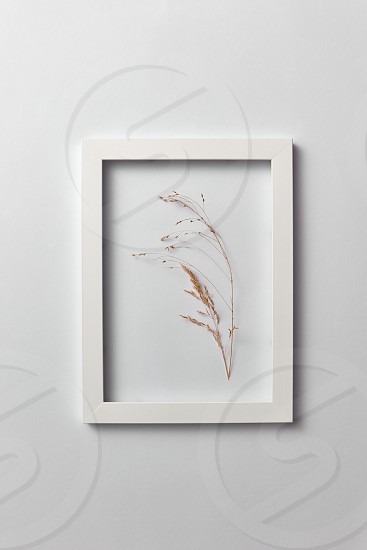 Natural eco frame with dry plant branch on a light gray background. Place for text. Top view. Organic postcard. photo