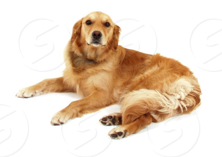 dog lying on floor photo