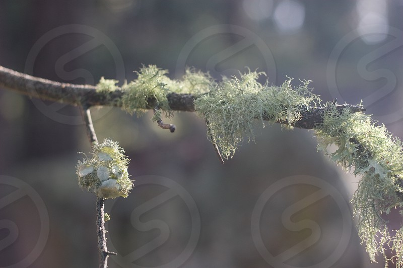 green-gray moss growing on deciduous tree photo
