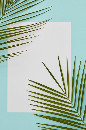 Angular frame decorated with palm leaves. White space can be used for any emotion ideas photo