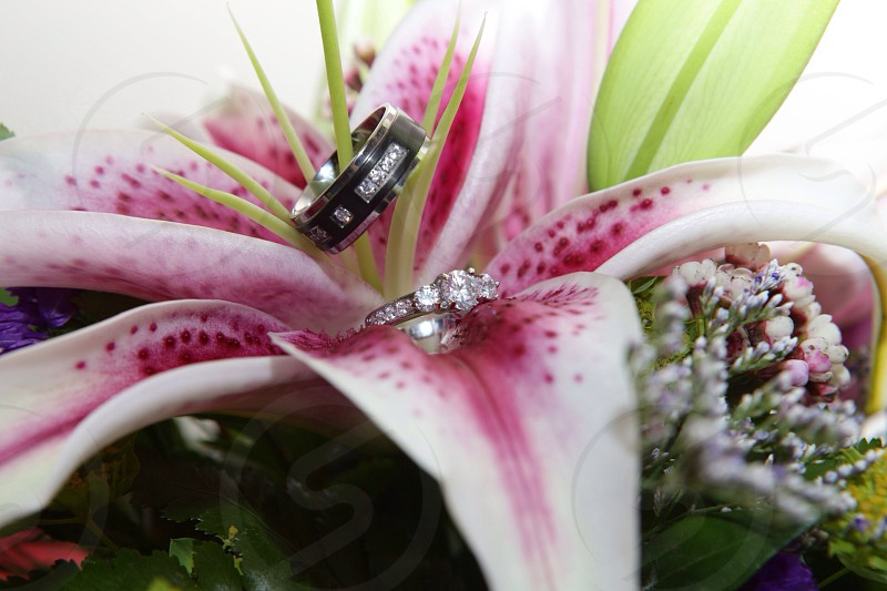 silver diamond studded ring on pink and white flowers  photo