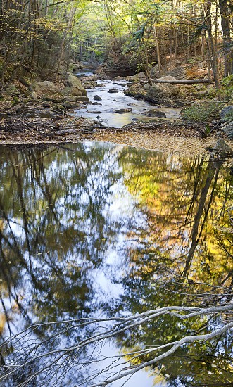 leafless tree branch on water photo