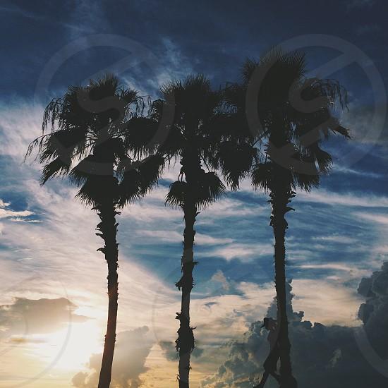3 green palm trees photo