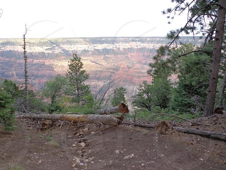 Grand Canyon North Rim Az photo