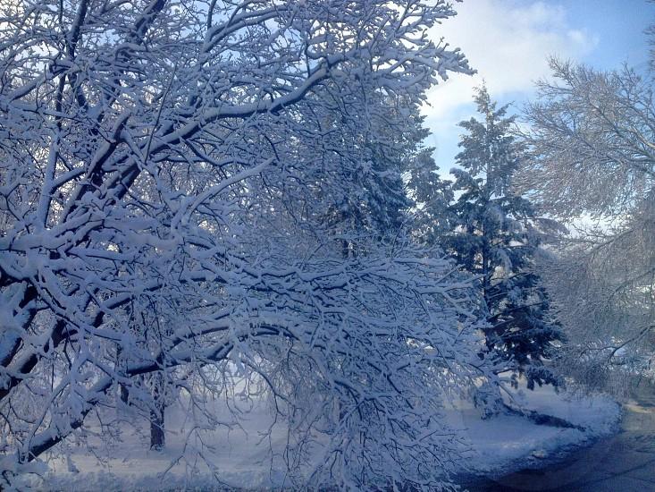 Minnesota snow storm 2014. photo