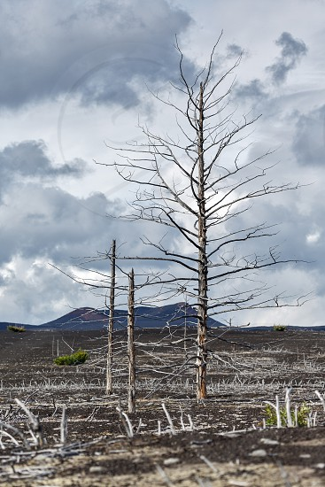 Lifeless desert landscape of Kamchatka Peninsula: Dead wood (Tolbachik Volcano lava field) in cloudy weather. Far East Russia Kamchatka. photo