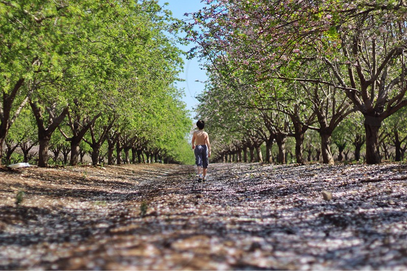 Boy child walking down a dirt path in an orchard photo