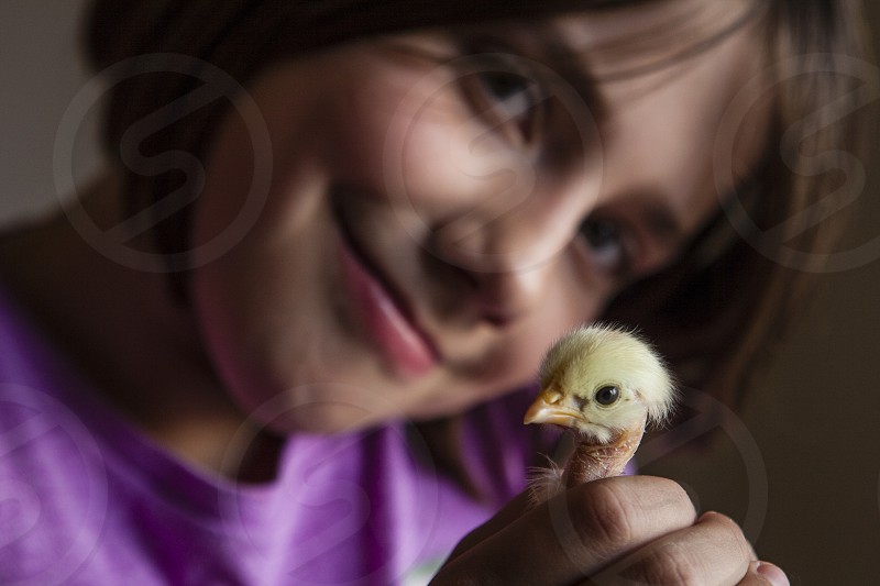 child baby chick new born birth yellow girl growth inspiring spring  photo