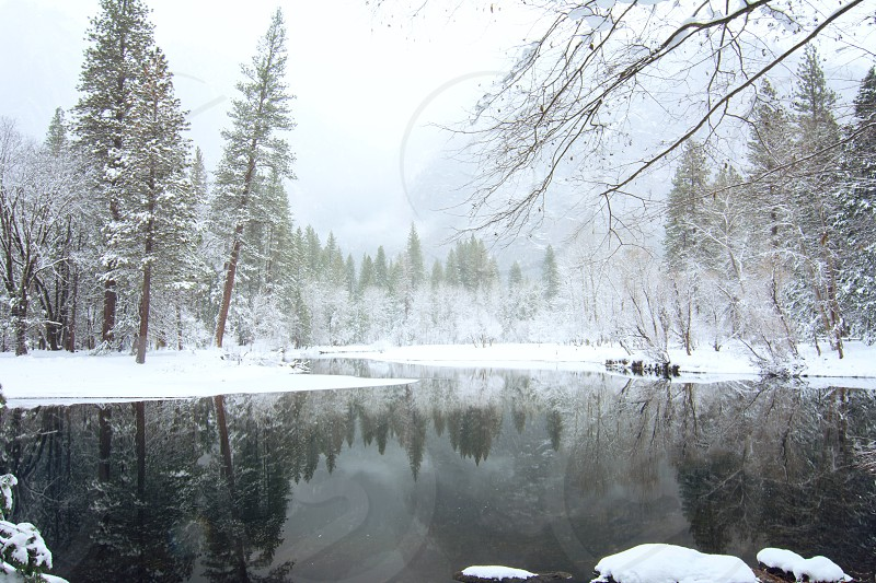 snow covered trees near lake during daytime photo