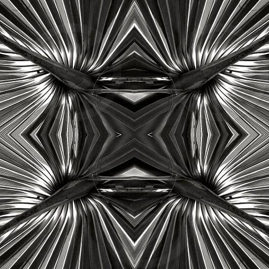 Abstract Saw Palmetto photo