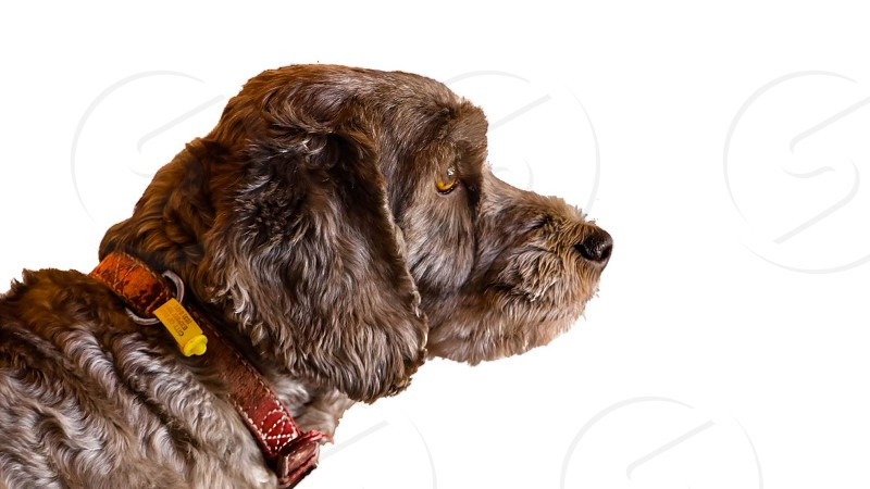 brown dog side view photo