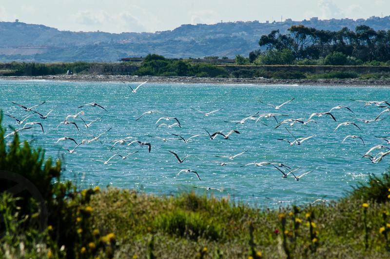 birds flying near the sea photo