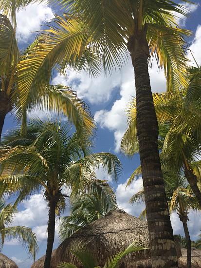 Chillin' on a hammock in Cozumel Mexico photo