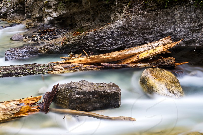 selective focus photography of tree branches and rocks surrounded by body of water photo