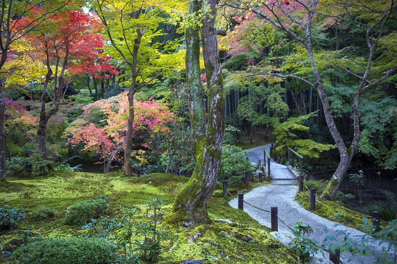 japanese garden maple tree kyoto red beautiful autumn nature color season outdoor fall zen green beauty japan colorful travel plant leaf temple forest moss bamboo enkoji famous peaceful shrine clean park wall ancient rock asia religion holy spirituality buddhism gravel landscape monastery symbol traditional architecture classic historic house old shugakuin photo