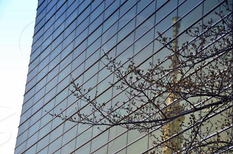 green tree near grey high rise building photo