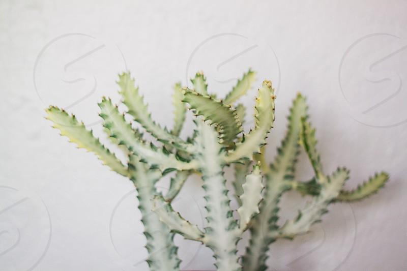 cactus // flora // green photo