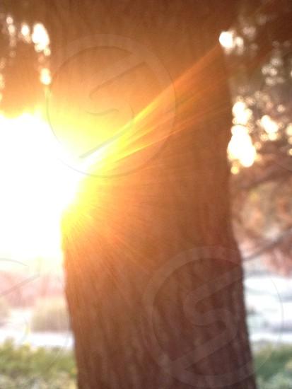 Morning Blur. Tree blur morning desert color sunset photo
