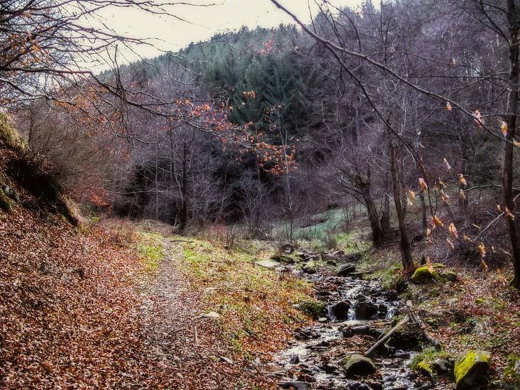 Endless - Cindrel mountains Sadului valley Sadu village area Sibiu county Romania 700m 04-01-2014 photo