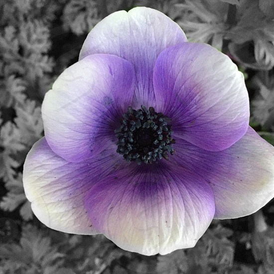 Spring; Springtime colors; flowers photo