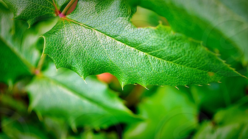 green oval leaved plant photo
