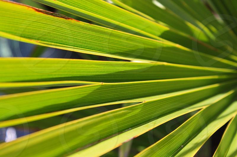 Green Palm Tree Leaves Closeup photo