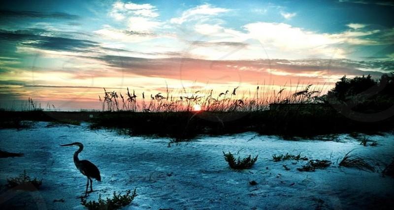 Florida Sea bird Beach Sunset photo