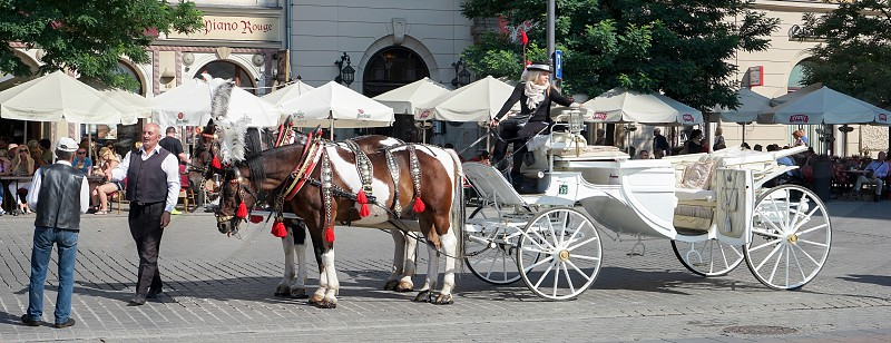 Carriage and horses in Krakow photo