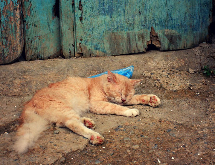 """""""Wanderer"""" A lone cat sleeps in the streets of a slum. photo"""
